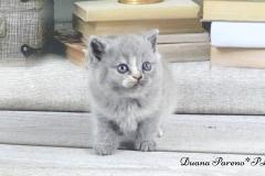 duana7